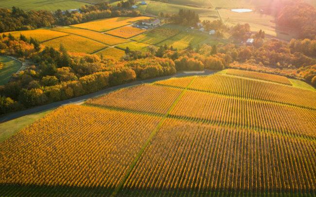 Cristom Vineyards in the fall