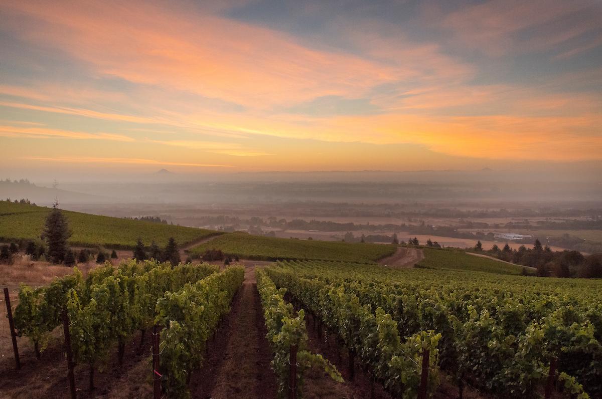 Cristom Vineyards sunrise