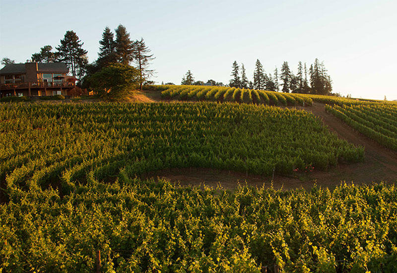 Arcus vineyard