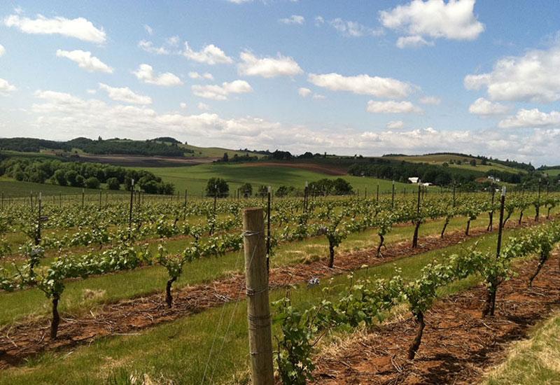 Eola Springs vineyard