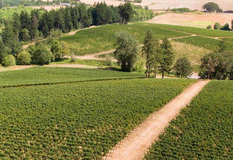 Vineyards with hills