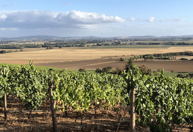 Meredith Mitchell vineyard