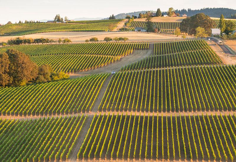 Ridgecrest vineyard