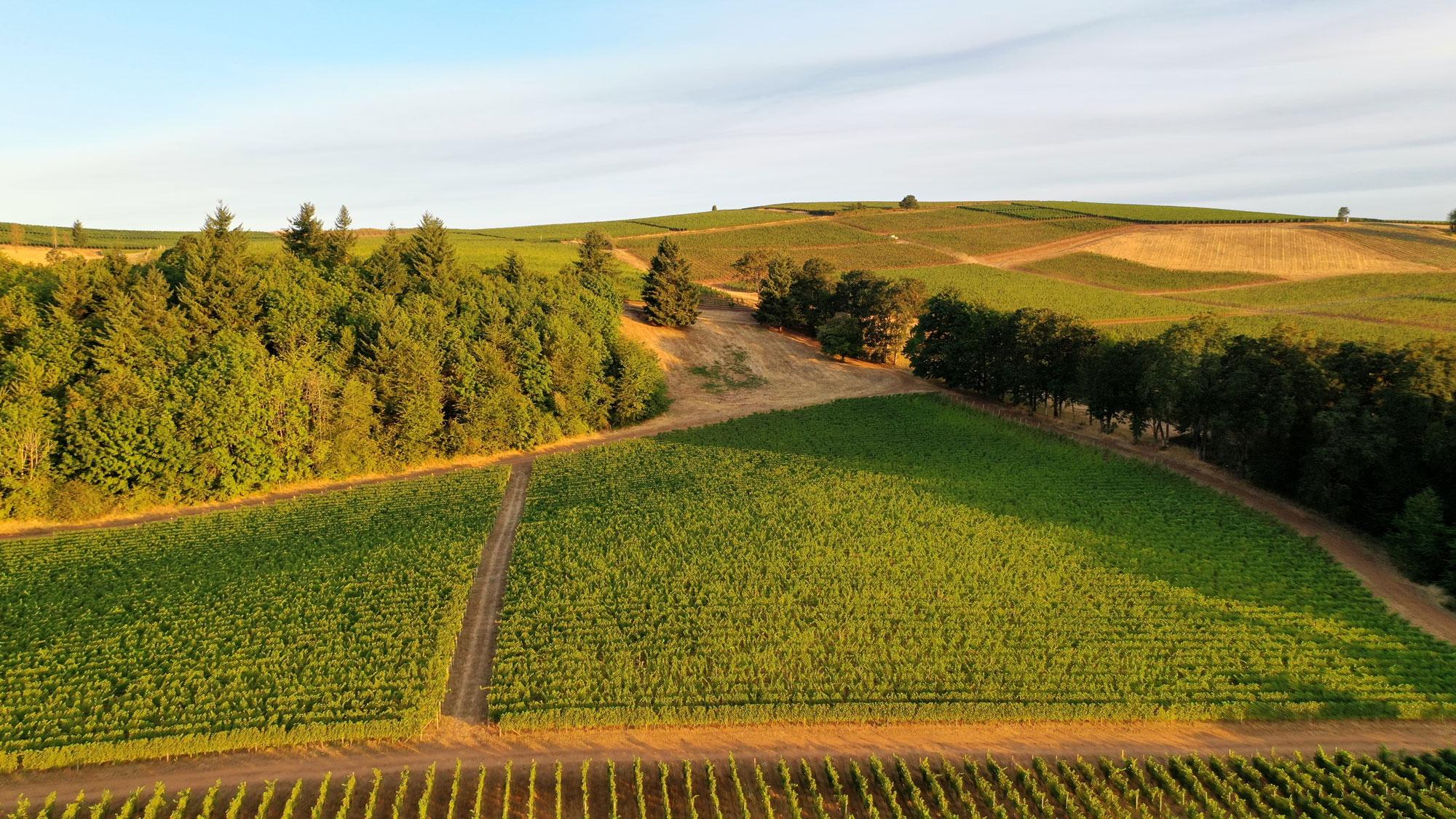 Cristom vineyard in the sunrise