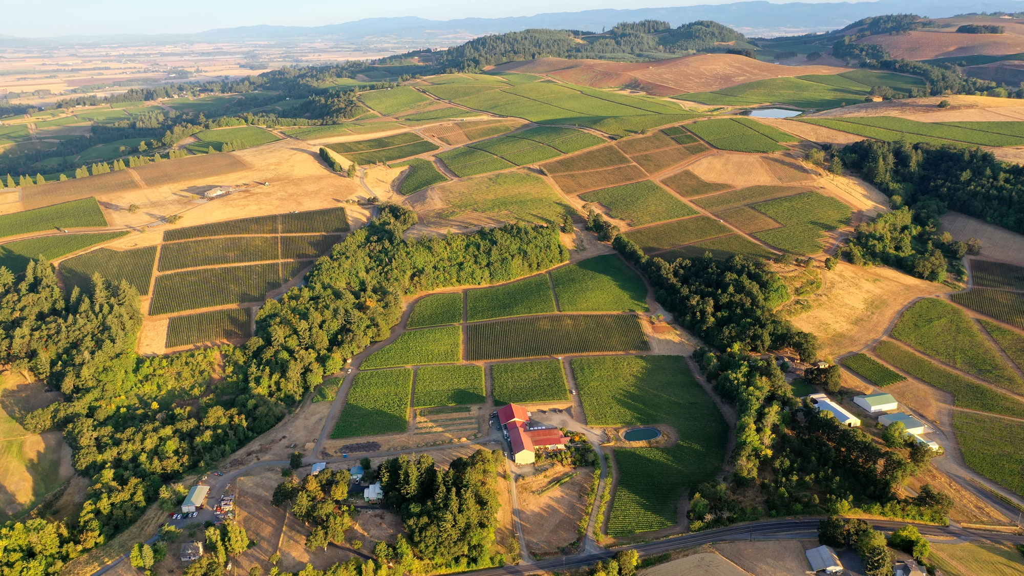 Cristom vineyards from the air