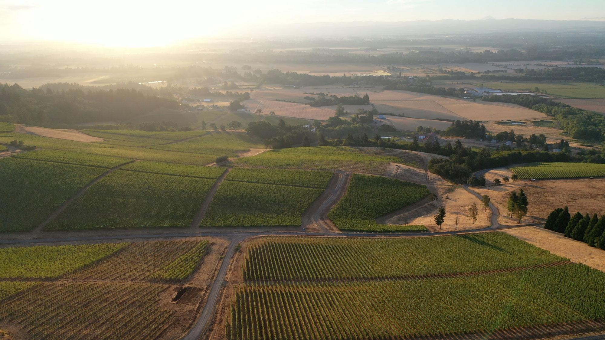 Vineyard at Cristom Vineyards